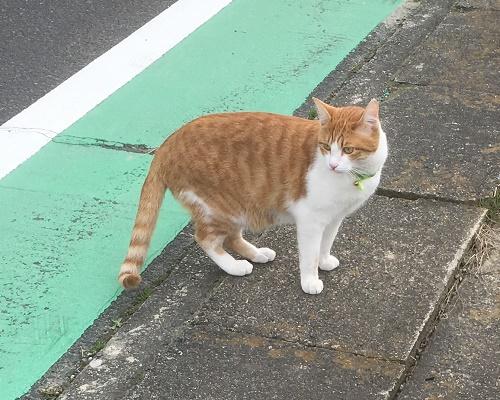 cat12031