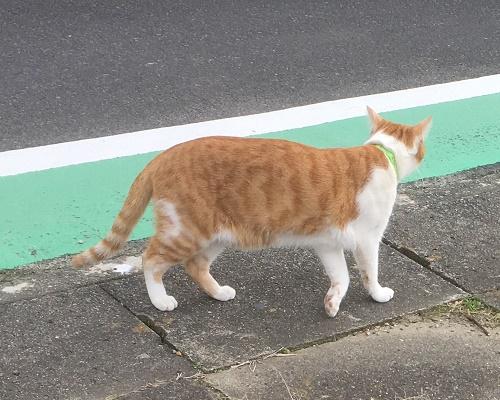 cat12032