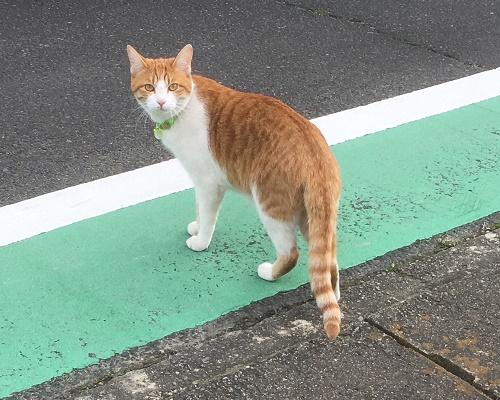 cat12033