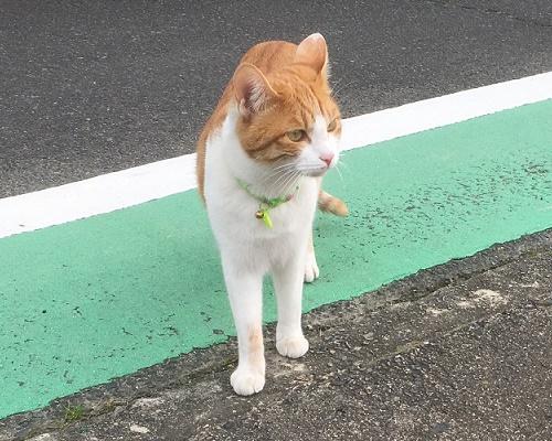 cat12034